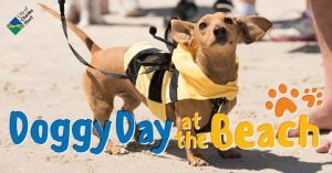 Doggy Day at the Beach image
